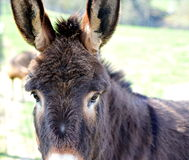 Sad donkey royalty free stock photos