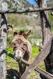 Sad Donkey on a farm stock photography