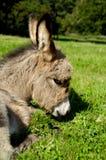 Sad donkey Stock Photo
