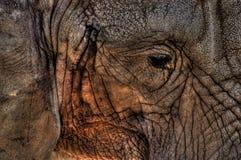 Sad elephant Stock Photo