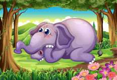 A sad elephant at the forest Royalty Free Stock Photos
