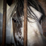 Sad eyes behind bars Stock Photos