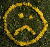 Sad face. The sad expression of a dandelion smiley face in a lawn Stock Photography