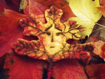 The sad face of an autumn leaf. stock photo