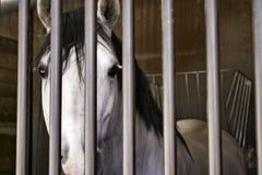 Sad face of a beautiful royalty free stock photos