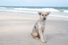 Sad face dog sitting on the beach royalty free stock images