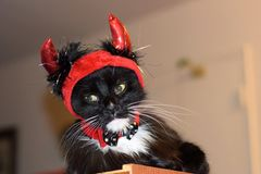 Sad Fluffy Devil Cat Royalty Free Stock Images