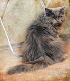 Sad fluffy gray cat Royalty Free Stock Photography