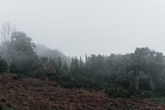 Sad foggy forest in a mountain Stock Photo
