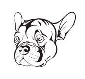 Sad french bulldog Royalty Free Stock Images