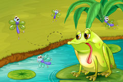 The sad frog in the pond Stock Images