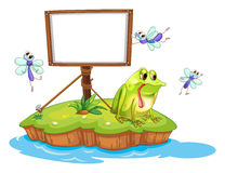 A sad frog and a white blank board Stock Photography