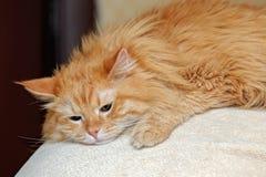 Sad gignger cat Stock Image