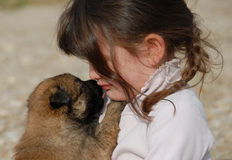 Sad girl and puppy. Sad child and her very young puppy belgian shepherd Stock Photography