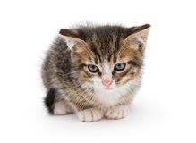 Sad gray kitten Stock Photo