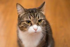 Sad grey cat Stock Photo
