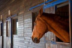 SAD häst Royaltyfria Bilder
