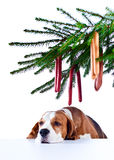 Sad holiday at a  lonely dog Stock Photography
