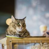 Sad homeless alone cat with a frightened look, lying on cage in a shelter waiting waiting for a home, for someone to. Adopt him, copy space stock images