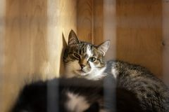 Sad homeless alone cat, looking out from cage behind bars in animal shelter waiting for someone to adopt him stock photo