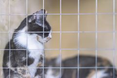 Sad homeless alone cat, sitting in cage behind bars in animal shelter waiting for someone to adopt him. Copy space royalty free stock photos