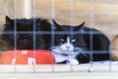 Sad homeless alone cats with green eyes, looking out from cage behind bars in a shelter waiting for someone to adopt him. Sad homeless alone cats with green eyes stock photos