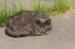 Sad homeless cat. Lying on the asphalt royalty free stock photos