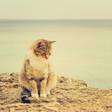 Sad homeless cat sitting on the beach. The image is tinted and s Royalty Free Stock Image