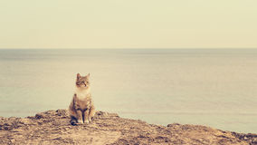 Sad homeless cat sitting on the beach. Stock Photography