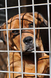 Sad Homeless dog Stock Photo
