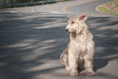 Sad and homeless dog Royalty Free Stock Photo