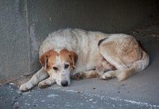 Sad homeless dog lying on the pavement stock photo