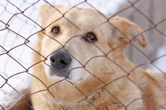 Sad homeless dog for metal mesh Stock Image