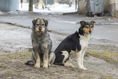 Sad homeless dogs on a cold spring afternoon. Photo of sad homeless dogs on a cold spring afternoon Stock Photography