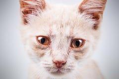 Sad homeless kitten portrait royalty free stock image
