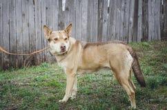 Sad homeless mongrel dog royalty free stock images
