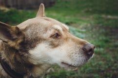 Sad homeless mongrel dog stock photos