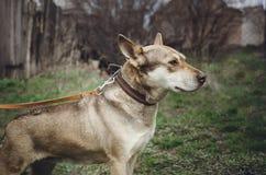 Sad homeless mongrel dog stock photo