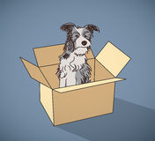 Sad homeless street dog alone in box color. Color vector illustration. EPS10 Stock Photos