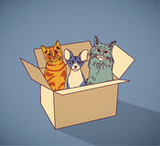 Sad homeless street pets cats in box color Stock Images