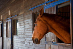 Sad horse. Is looking out of its stables royalty free stock images