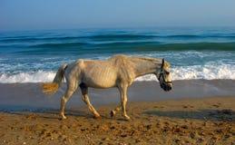 Sad horse. Walk at beach Stock Images