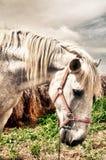 Sad horse Royalty Free Stock Image