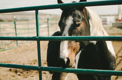 Sad Horse Behind Bars. A horse in a corral looking through the metal bars royalty free stock photos