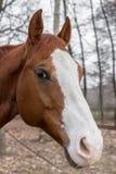 Sad horse Stock Photos
