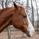 Sad horse. Close up on horse head against blurred background royalty free stock photography