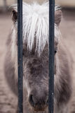 Sad horse Stock Photo