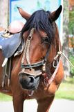 A sad horse from the park - it`s tethered and tired.  royalty free stock images
