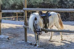 Sad Horse Pony Under The Saddle At The Hitching Post. Rhodes, Greece. Stock Photo