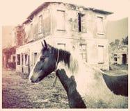 Sad horse Stock Images